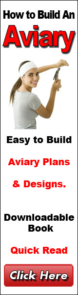 How To Build An Aviary
