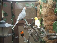 indoor-aviary