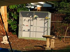 outdoor-aviary