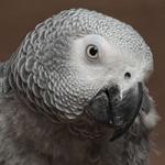 powder-down-birds