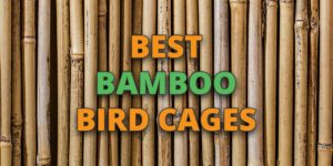 bambbo bird cages