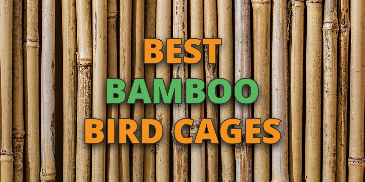 Bamboo Bird Cage: Reviews of the Best
