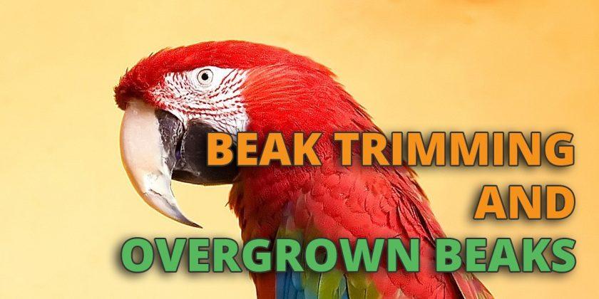 beak trimming
