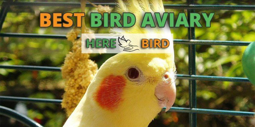 Best Bird Aviary For Sale: 6 Outdoor, Indoor & Walk-in Aviary Reviews
