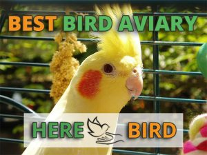 best-bird-aviary