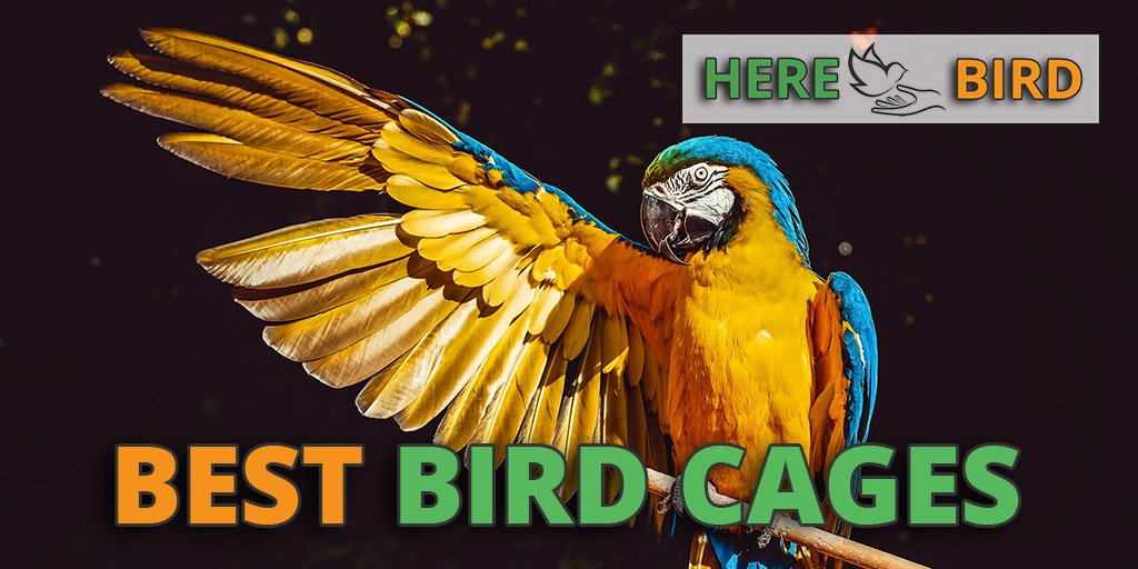 s THE XL MOVER: Portable Parrot Perch w Cup Cockatoos for Macaws Amazons and Large Birds