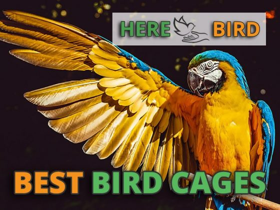 best-bird-cages