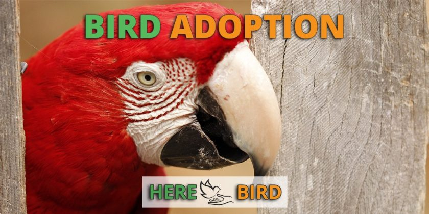bird-adoption