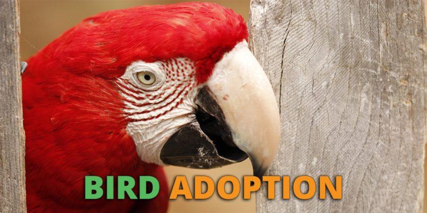 bird adoption