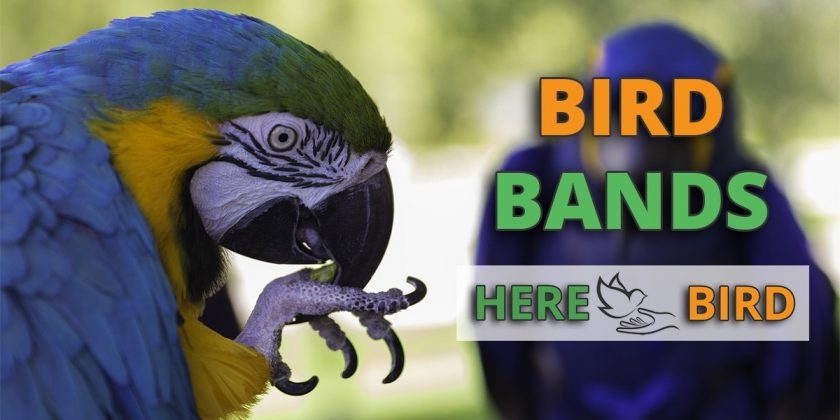 bird-bands