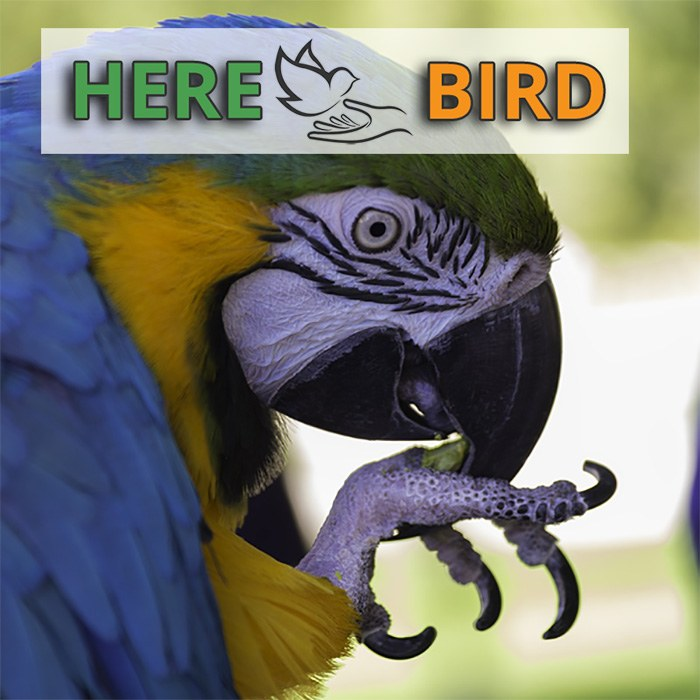 Bird Banding (Leg Bands): Identification, Use & Reporting