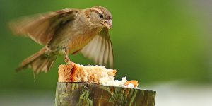 bird-bread-3
