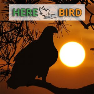 bird-cage-lights