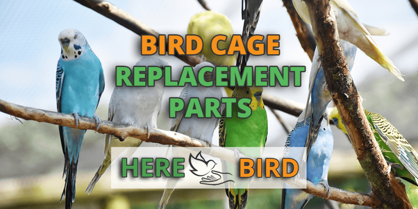 bird-cage-replacement-parts