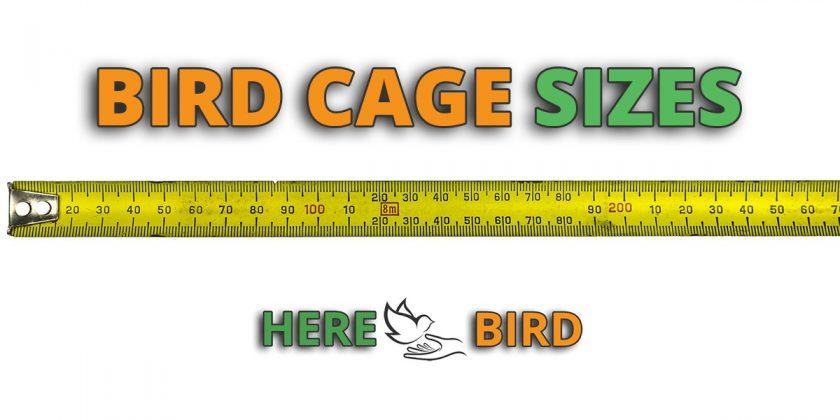 bird-cage-sizes