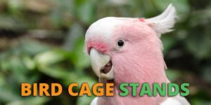 bird cage stands