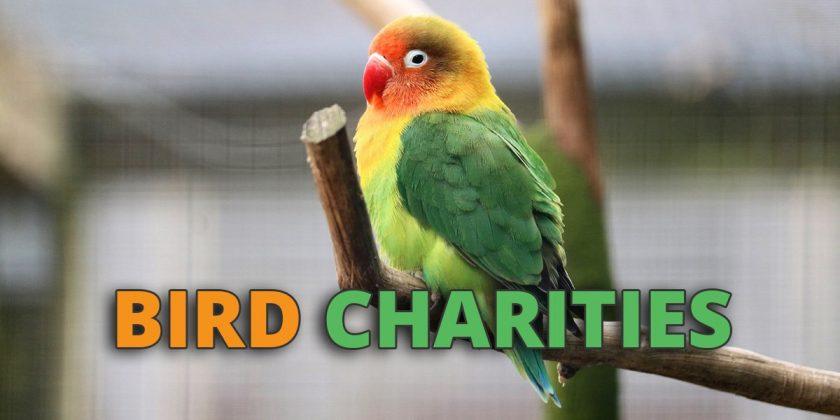bird-charities
