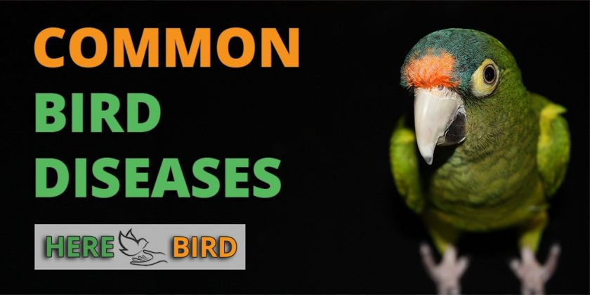 5 Common Parrot Diseases Explained: Symptoms and Treatments