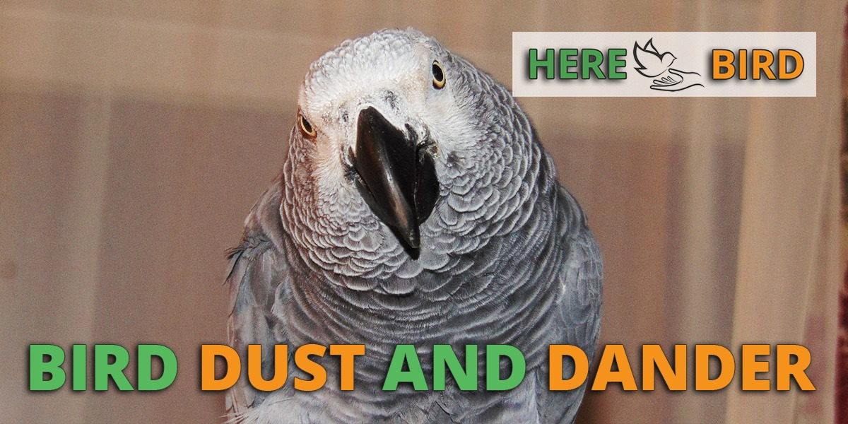 bird dust dander