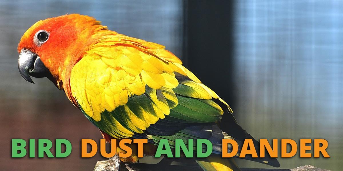 Bird Dust Dander