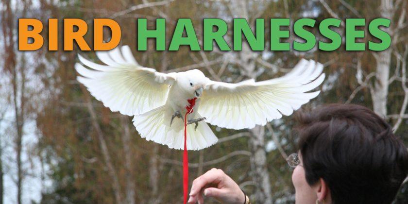 Best Bird Harness & Bird Leash For Sale
