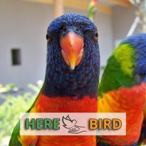 bird-heater-warmer