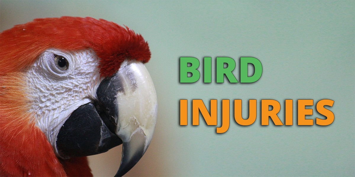Bird Injuries
