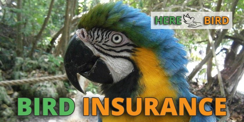 bird-insurance