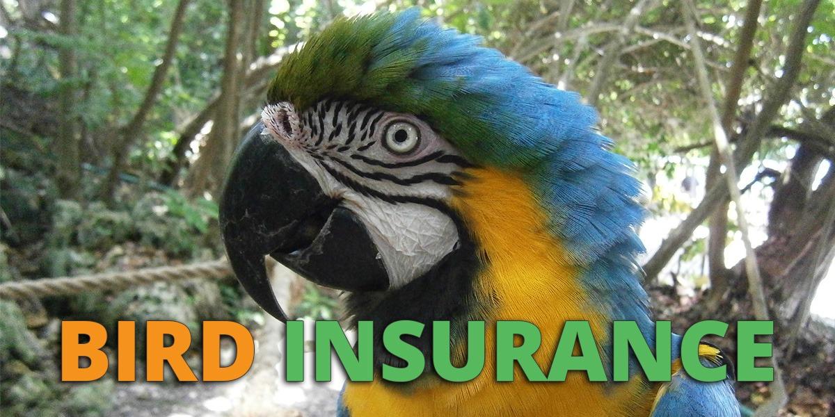 Bird Insurance