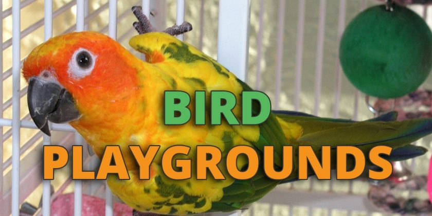 bird playgrounds