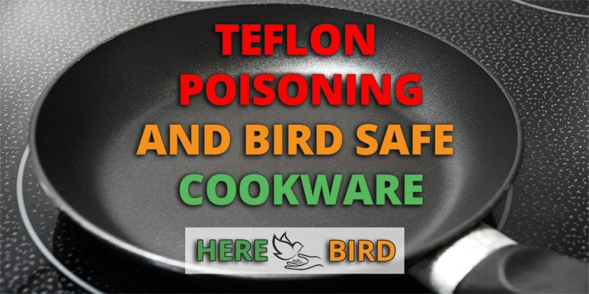 bird-safe-cookware