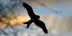 Bird Safe Supplies & Accessories: Cookware, Toys, Paint, Plants