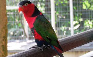 bird sitter