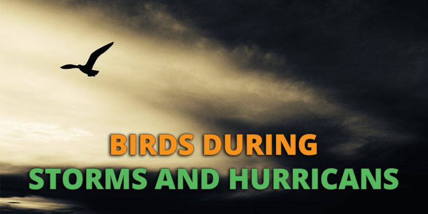 Birds During Storms And Hurricanes