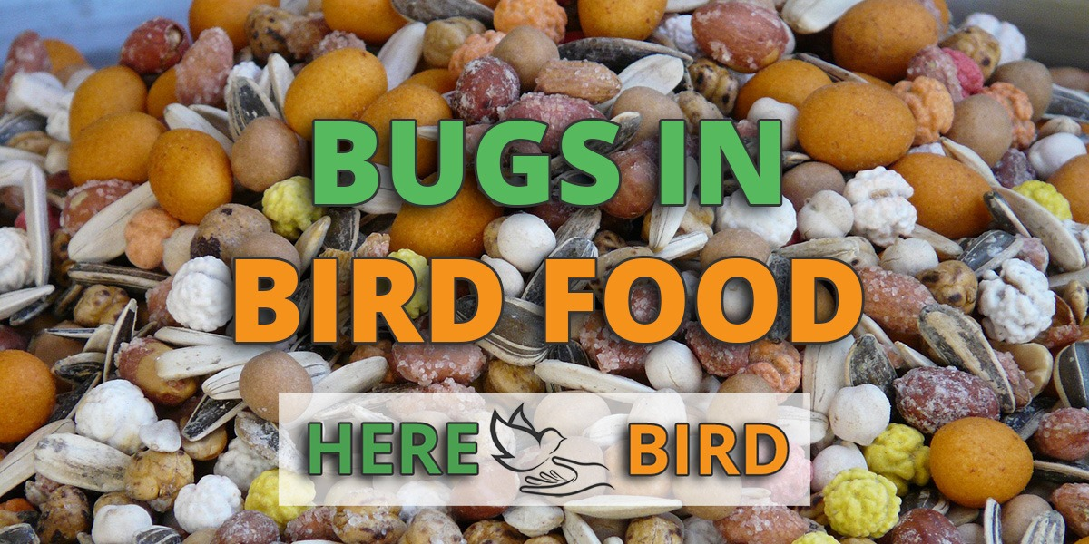 bugs-in-bird-food