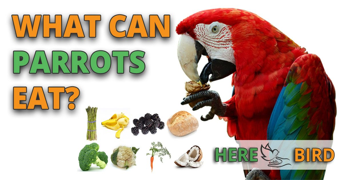What Do Parrots Eat? 55 Bird-Safe Parrot Foods They Can