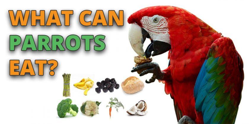 can-parrots-eat
