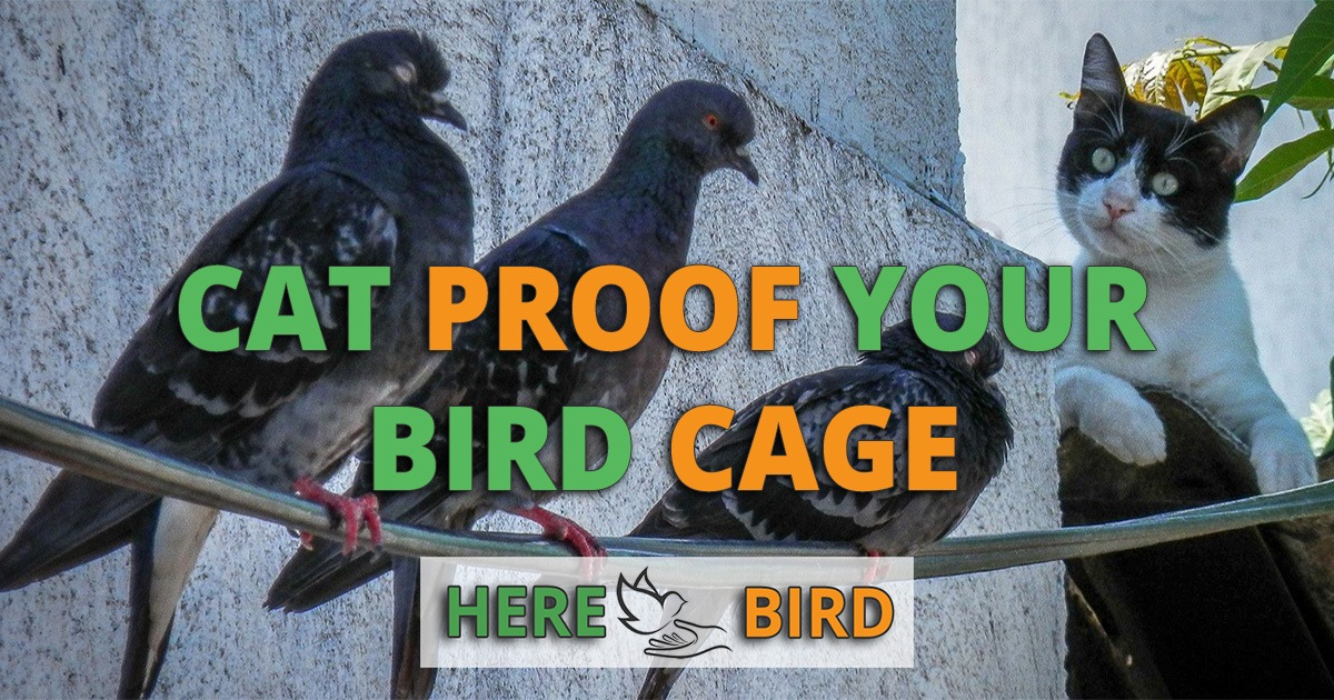 Safely Cat Proof Your Bird Cage Against Cats Dogs And More