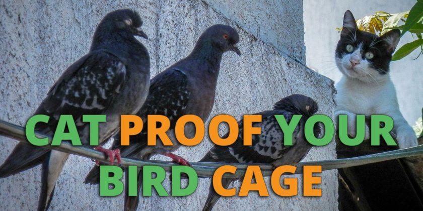 cat proof bird cage