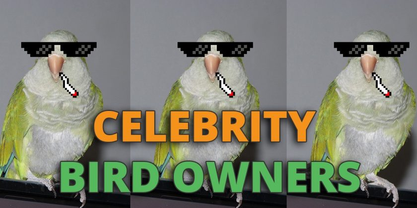 celebrity-bird-owners