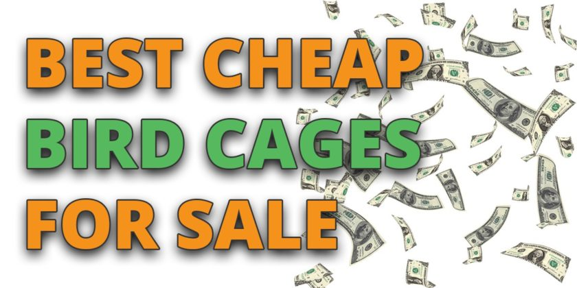 cheap bird cages