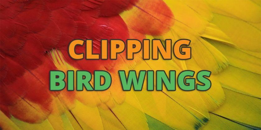 clipping birds wings