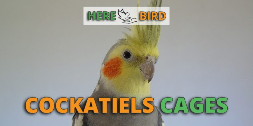 cockatiel cages