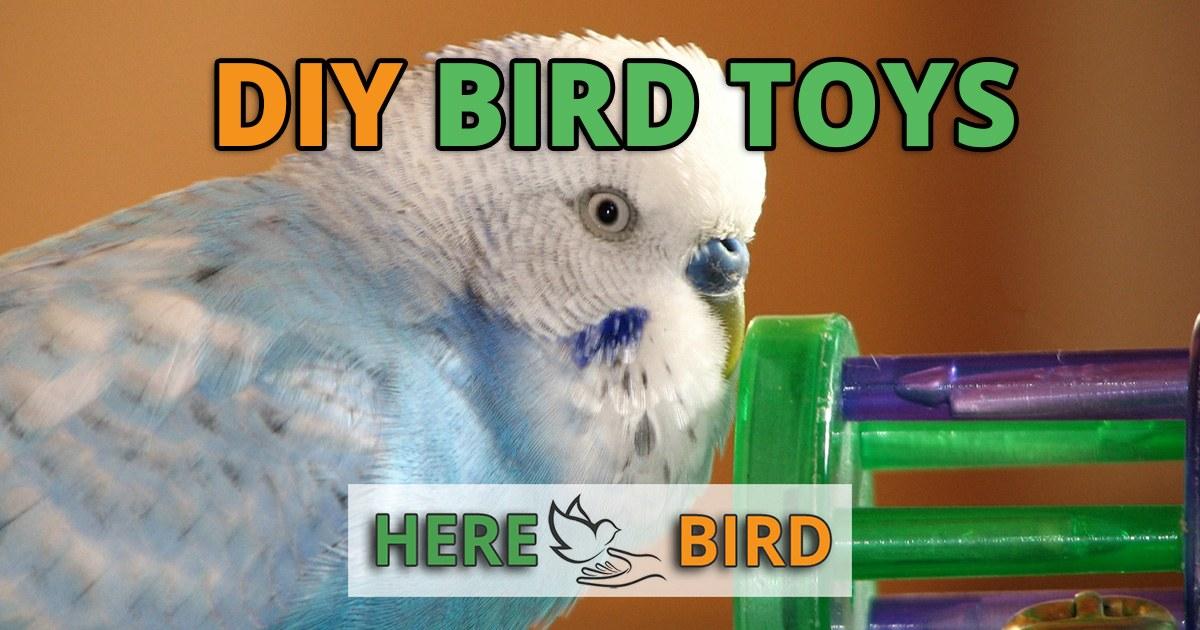 Discount Bird Toys : Diy bird toys homemade out of cheap household items