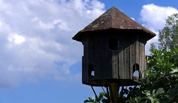 dovecote birdhouse 2