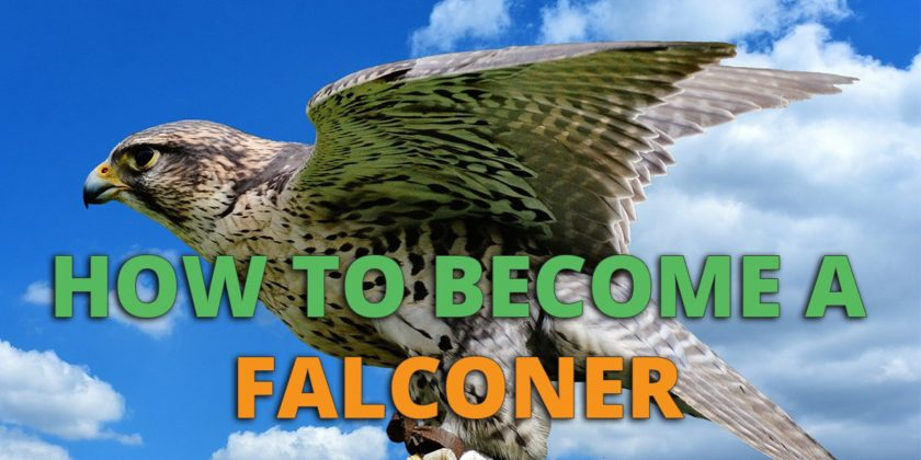 How To Become A Falconer