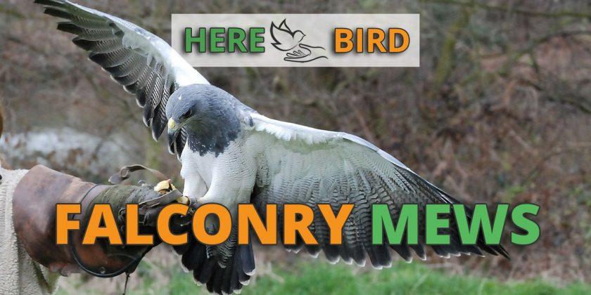 falconry-mews