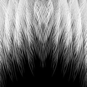 feather-mites-1