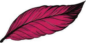 feather-mites-2