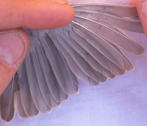 feather stress bars